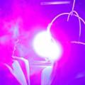 IMG_7981_1200_DavidTribal