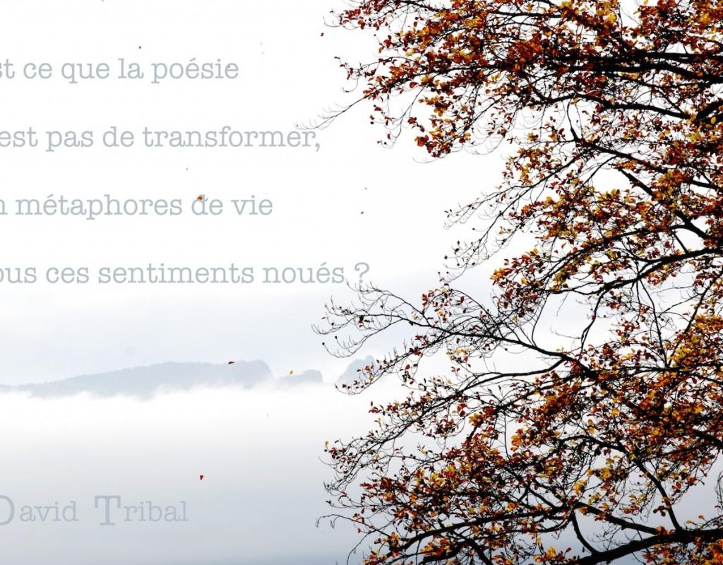 DavidTribal-IMG_0644_luz-texte_1400