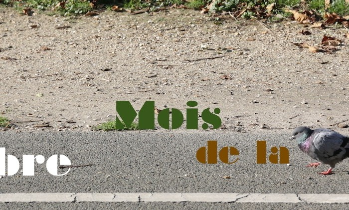 Novembre, Mois de la Photo – Paris
